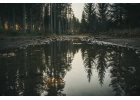 高大的树木形成森林倒映在一个小湖的水中_8857667