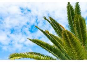 碧绿的棕榈树在蔚蓝的晴空和淡淡的云彩的衬_9081992