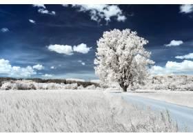 美丽的多云天空下靠近麦田的草地上的一棵树_9183913