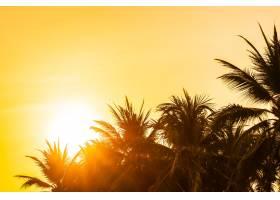 美丽的户外自然有天空和椰子棕榈树周围的_4320973