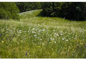 美丽的绿色田野上开满了五颜六色的野花_12858479