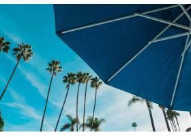 蓝色雨伞与高大的棕榈树的低角度_8857956