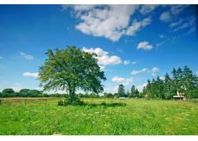 在阳光明媚的日子里乡间绿树成荫_945164
