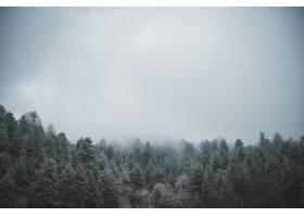 在阴云密布的天空下航拍常绿松树_13005872