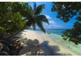 塞舌尔普拉斯林阳光下绿树成荫的海滩上的_10978626