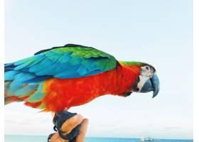 五颜六色的金刚鹦鹉坐在男人的手臂上_1275196