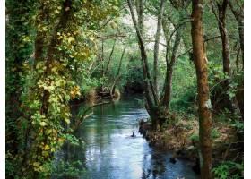 令人着迷的松林风光和美丽的湖泊_11677954