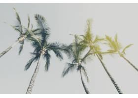 暑期旅游度假理念蓝天背景下美丽的手掌_1349445