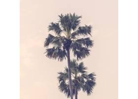 光效树木夏日落日_1088388