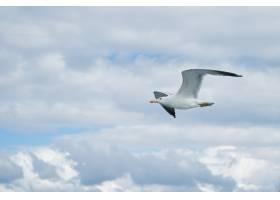 带着云彩在天空中飞翔的海鸥_932966