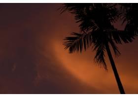 印度尼西亚吉利AIRLombok日落时一棵瘦小的_8048654