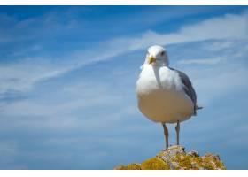 可爱的海鸥栖息在美丽多云的天空下的小山上_10185922