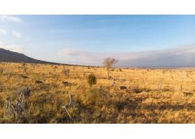 广泛拍摄的斑马在肯尼亚泰塔山察沃西部蓝天_9184405