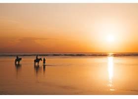 海滩上骑在马背上的年轻浪漫情侣的剪影肖像_8270058