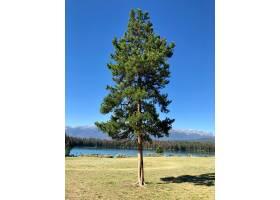 湖边的一棵冷杉树上长满了树木和高耸的落基_9282995