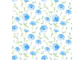 花卉无缝图案白色背景上盛开的菊苣_10123849