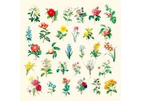 一套美丽的盛开的野花_3416465