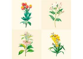一套美丽的盛开的野花_3529970