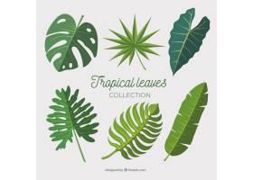 平面设计的热带树叶系列_2783949