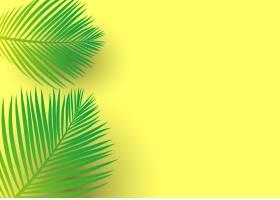 亮黄色背景上的棕榈树叶子_4827936