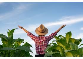 烟草种植园里快乐的年轻女子_3713044
