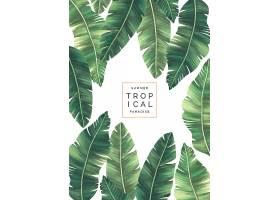 优雅的热带背景和美丽的树叶_4859896