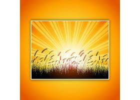 夕阳西下的天空映衬着麦子的剪影_884014