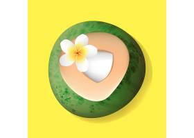 新鲜切开的椰子配花卉插图_2611262