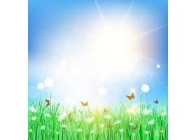 在雏菊景观中飞舞的蝴蝶_886543
