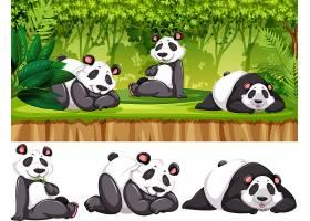 野生大熊猫_4125002
