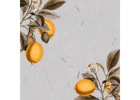空白柠檬树卡片_4557580