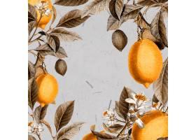 空白柠檬树卡片_4557581
