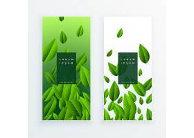 绿叶卡片设计套装_2958422