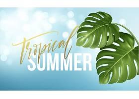 热带夏日文字的背景来自现实的明亮的绿叶的_13204861