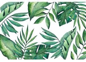 热带树叶壁纸_8247188