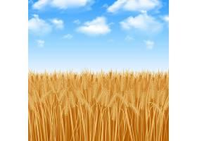 金黄色的麦田和夏日的天空背景_2868847
