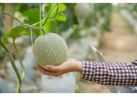 植物研究人员正在检查哈密瓜的效果_4668762