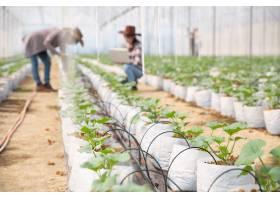 农学家在植物分析中检查农场农民和研究人_4668720