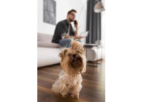 可爱的狗主人在后面_10357040