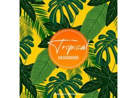 热带植物背景_2518540