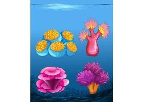 一套不同的珊瑚礁_4008666