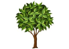 一棵白色背景上的自然树_4150237