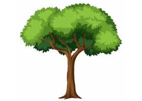 白色背景上的孤立树_4382376