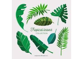 平面设计的热带树叶系列_2783951