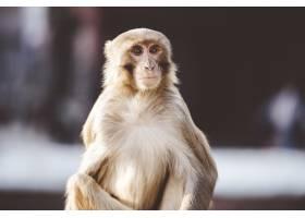 一只猴子坐在户外的特写镜头_9076761