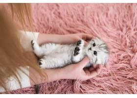 一名妇女怀里抱着一只滑稽的灰色小猫_2612786