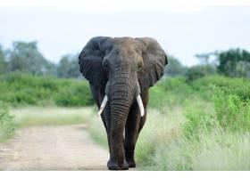一头美丽的大象在绿草如茵树木环绕的碎石_11502825