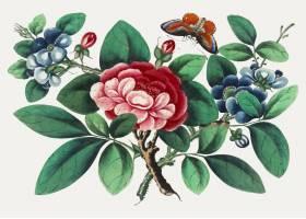 以花和蝴蝶为特色的中国画_3593437