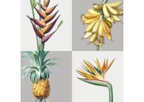 一套热带植物的复古插图_3416000