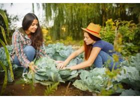 快乐的年轻家庭在户外花园采摘浆果爱情_11315151